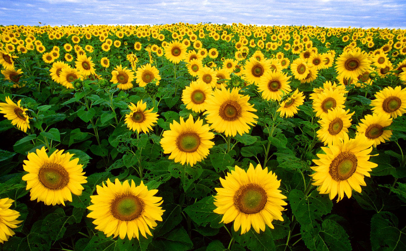 Sunflower Journeys 2018 - And Then We Learn Event Image