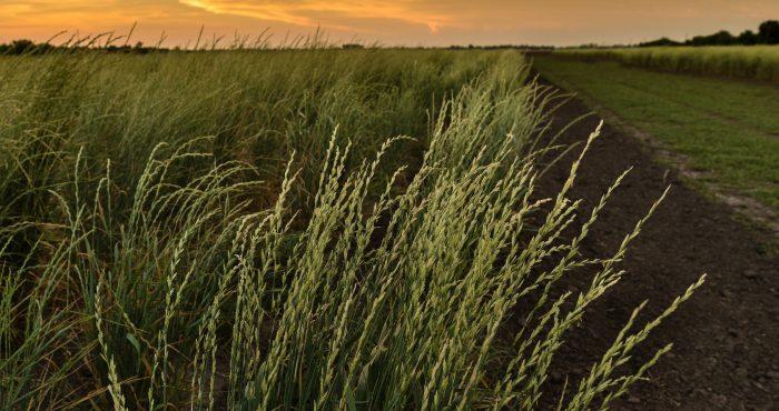 Land Institute - Hidden Kansas Radio Series Event Image